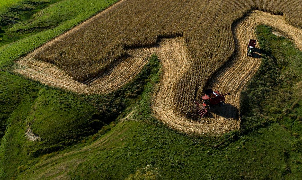 Planting to Harvest | Corson